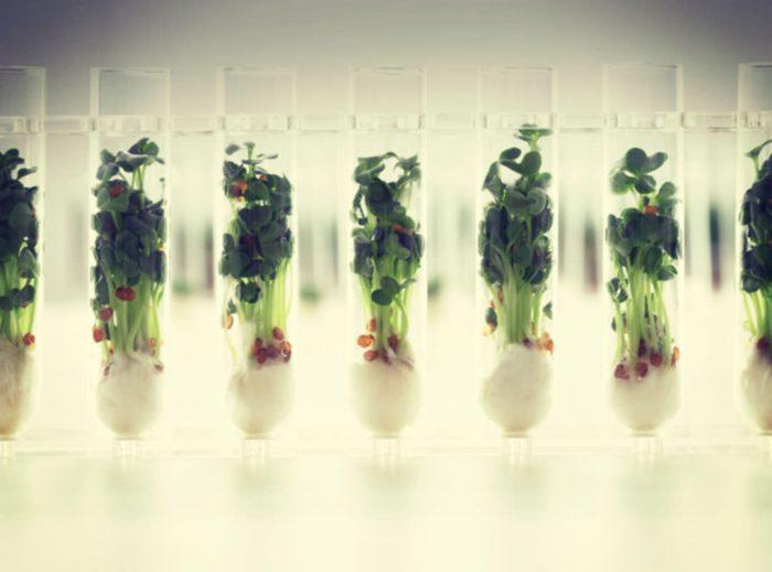 Smart Food Paris