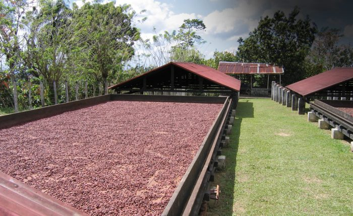 séchage des fèves