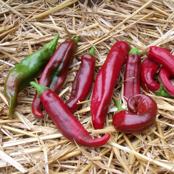 La classification des piments