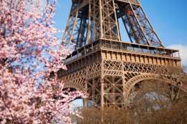 Le printemps des cerisiers japonais The Peninsula Paris