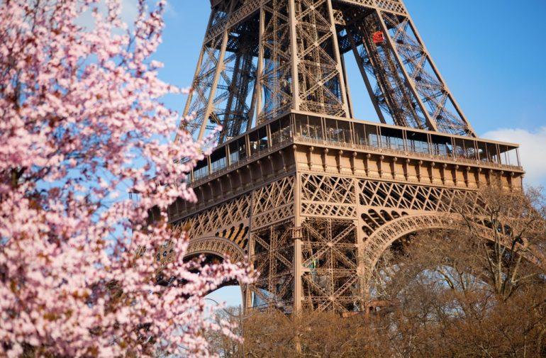 Le printemps des cerisiers japonais The Peninsula Paris