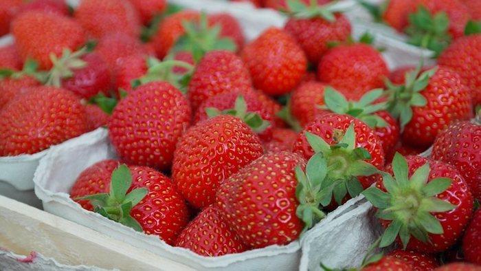 Agricool des fraises toute l'année