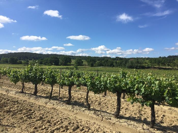 Classique Ventoux rosé 2016 de Marrenon
