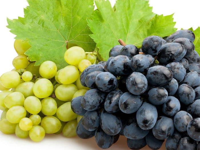 Las uvas, los granos del placer se sientan a la mesa hasta octubre ...