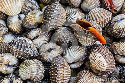Les coquillages à déguster en automne