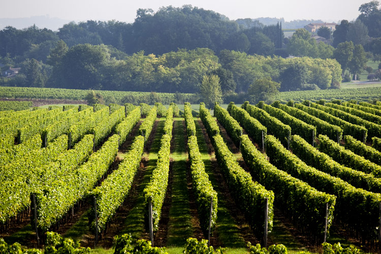 Une carte des vins à prix caviste