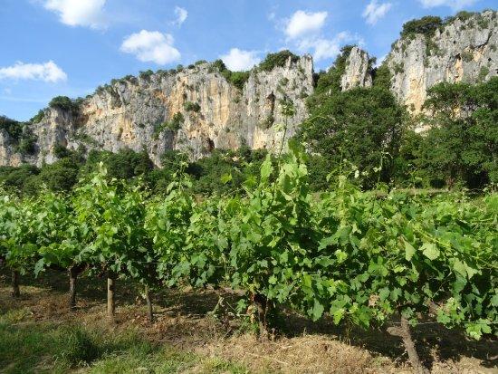 Les vins d'Ardèche primeurs 2017