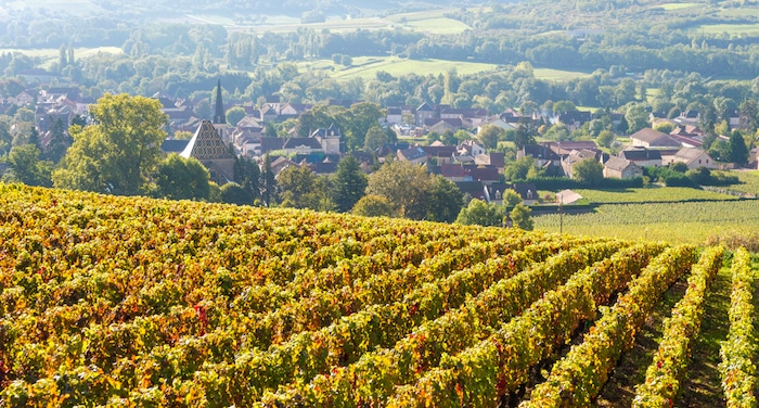 Millésime 2017 en Bourgogne