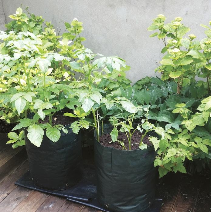 sacs de plantation Pompadour