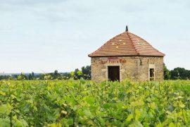 Côte de Nuits-Villages Clos de Magny 2016