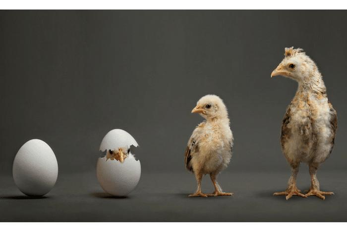 incubateurs