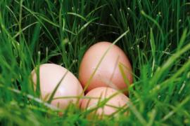 Bien choisir et conserver ses œufs