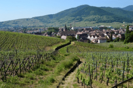 La collection Terroirs d Alsace
