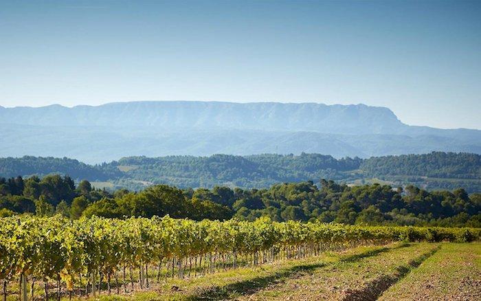 Vignoble de Fontenille