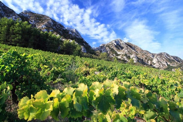Vignes de Château Romanin