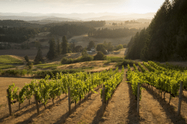 Willamette Valley 2015