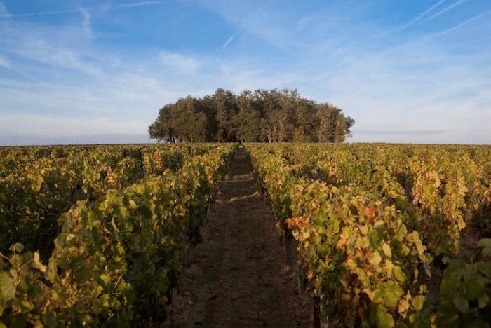 vignoble du Château de Ferrand