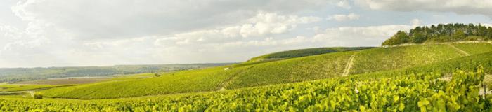 vignoble de la Chablisienne