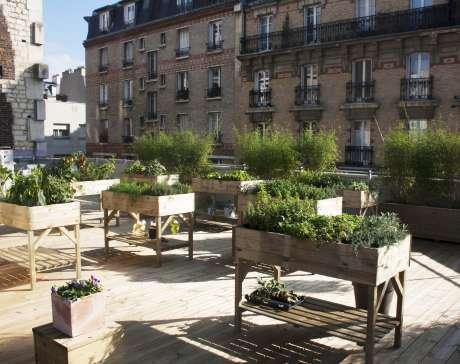 agriculture urbaine par Merci Raymond