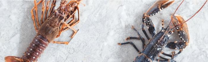 différences entre homard et langouste