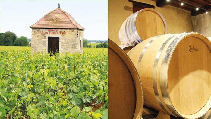 vignes et barriques Féry