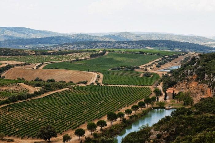 vignoble de Château de Lastours