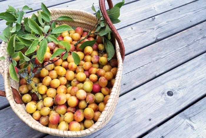 La plus petite des prunes