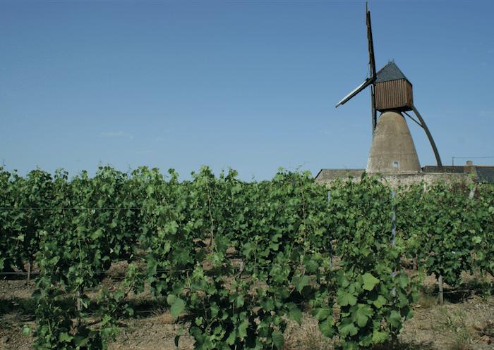 Les meilleurs Bonnezeaux, vins gastronomiques de Loire