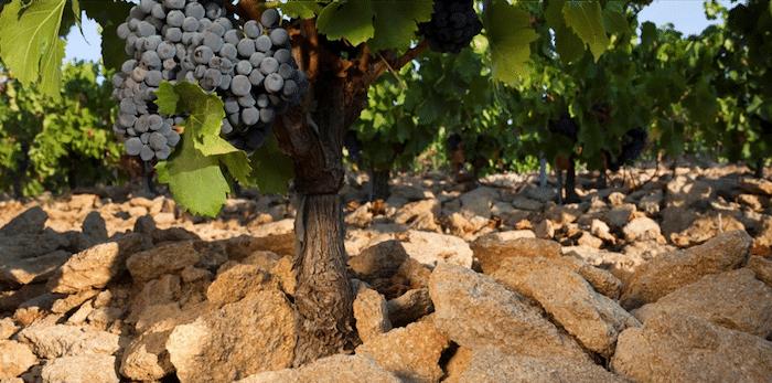 vigne des Sénéchaux