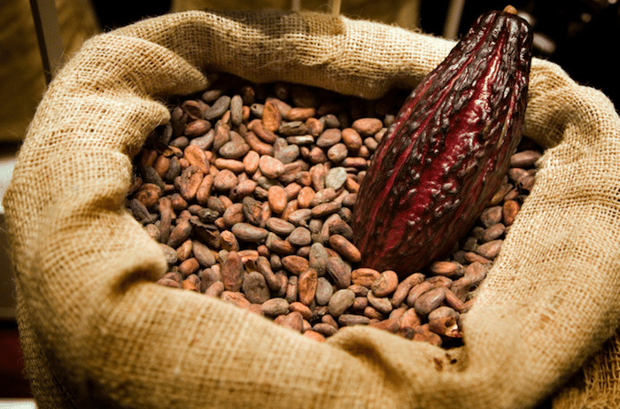 cacao bio dominicain