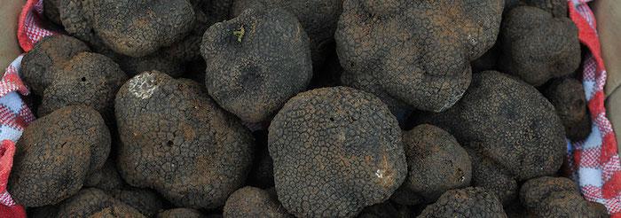 formation truffe