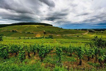 Bourgogne 2018
