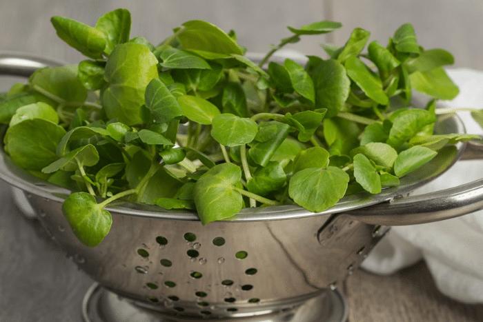 Le cresson, l'exquise petite salade au goût puissant