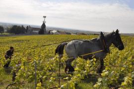 Les chevaux de trait en Champagne