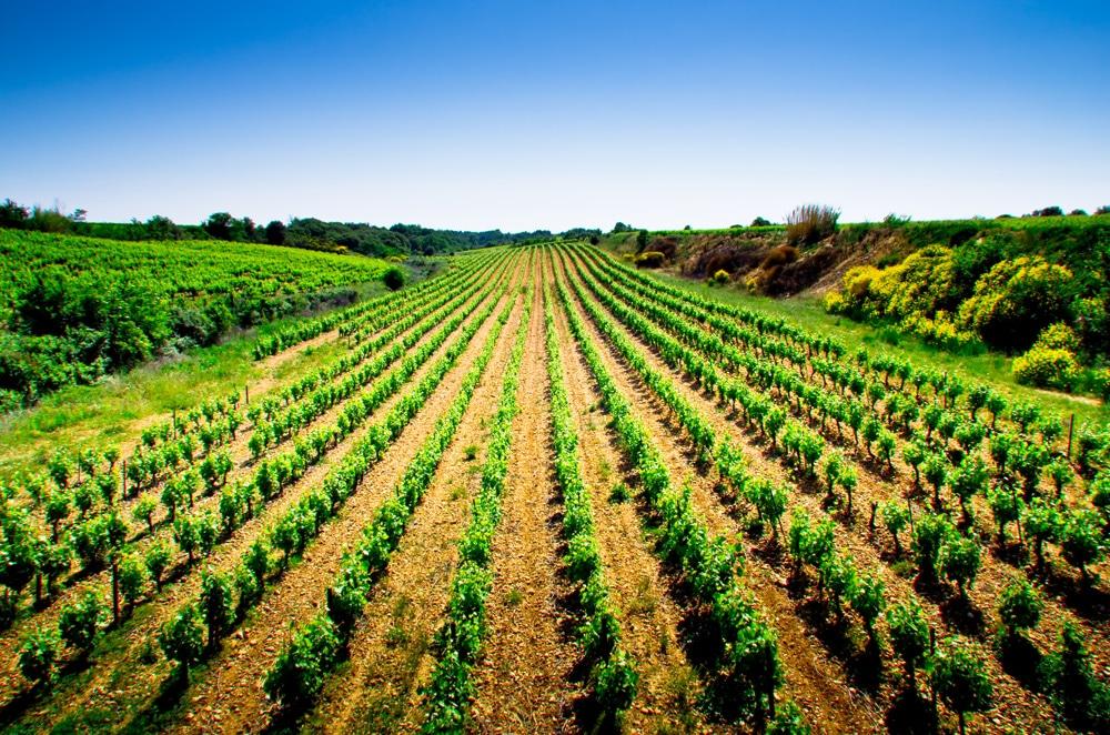 rosés du Languedoc 2017 à moins de 10€