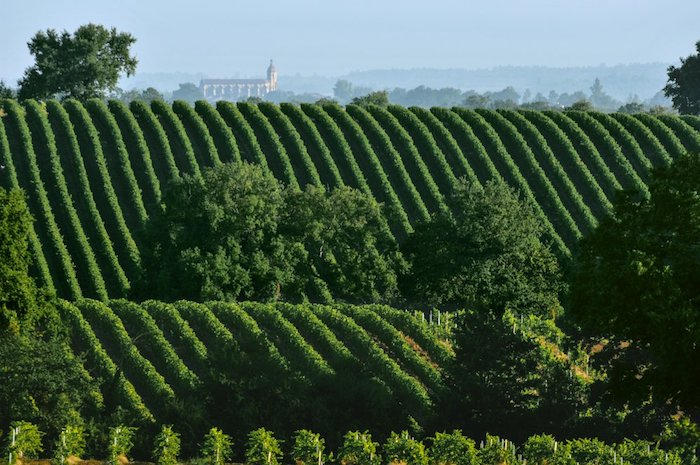 Les vins de Gascogne
