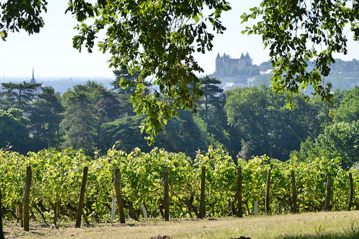 Saumur-Champigny 2016 du Domaine Langlois-Chateau