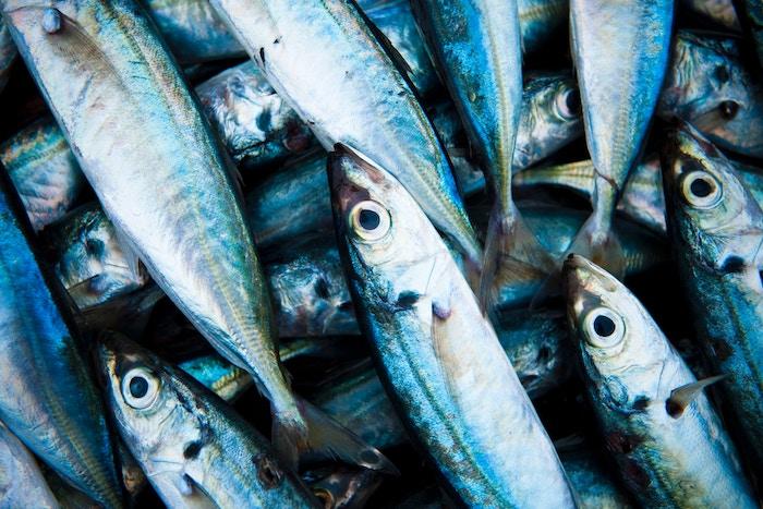 Semaine de la Pêche Responsable 2019